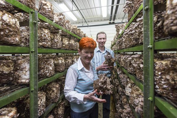 Tiina Uotila ja Jari Kipinoinen esittelevät siitakkeita.