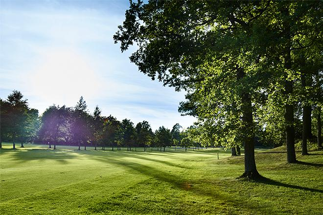 Auragolfin golfrata.