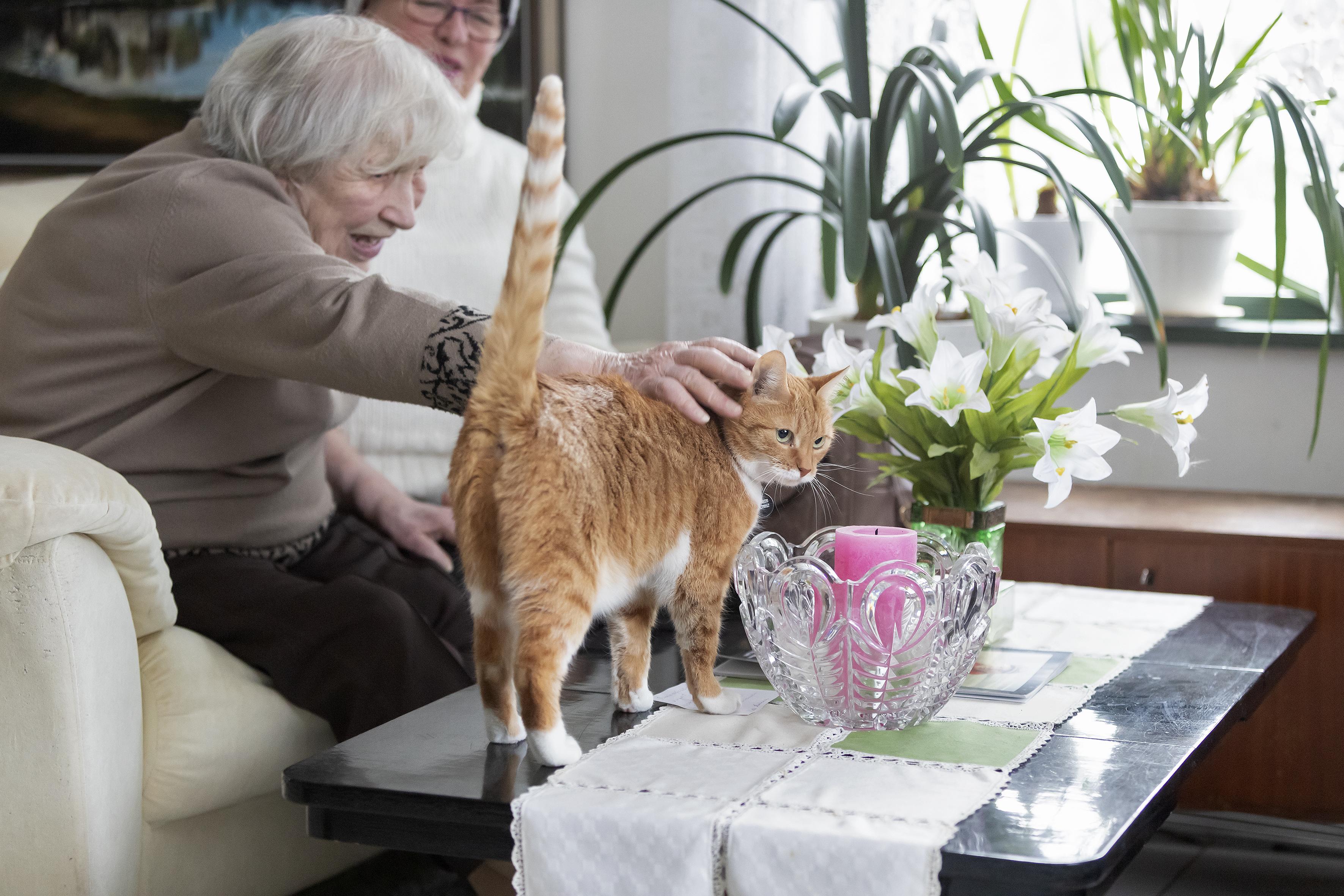Ystävätoiminta, asiakas Annikki Miettunen silittää kissaa.