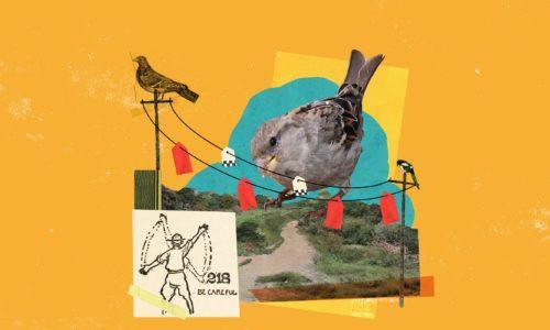 Lintu katsoo sähkökaapeleissa olevia lintuvaroittimia.